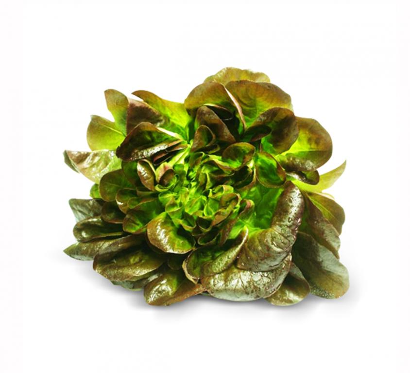 Canasta Lettuce
